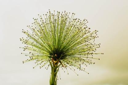 flower-2071522_1280.jpg